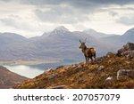 wild stag overlooking loch... | Shutterstock . vector #207057079