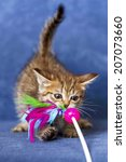 Stock photo cute kitten 207073660