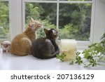 Two Kittens Watching Outside By ...