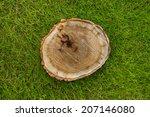 Tree Stump On The Green Grass ...