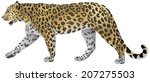 leopard walking  wild big cat... | Shutterstock .eps vector #207275503