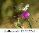 Small photo of butterflies defence; a lot of little bugs attacking the butterfly on a thorn, symbolic meaning