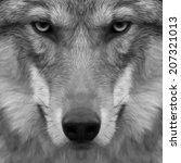 Eye Contact With Severe Wolf....