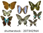isolated butterfly | Shutterstock . vector #207342964