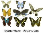 isolated butterfly | Shutterstock . vector #207342988