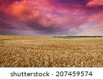 wheat land background | Shutterstock . vector #207459574