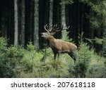 elk bugling | Shutterstock . vector #207618118