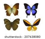 isolated butterfly | Shutterstock . vector #207638080