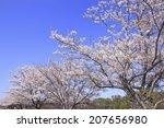 sakura of nara heijokyo | Shutterstock . vector #207656980
