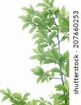 fresh green leaves and sunshine ...   Shutterstock . vector #207660253
