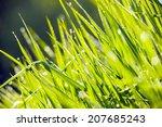 morning dew. morning light... | Shutterstock . vector #207685243