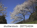 An Image Of Wild Cherry Tree