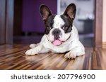 French Bulldog Lying Down Tire...