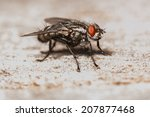 house fly close up. shallow... | Shutterstock . vector #207877468