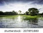 Pantanal In Mato Grosso. The...