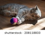 Stock photo gray cat plays with a toy 208118833