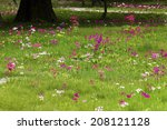 The Field Of Oku Nikko With...