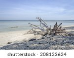 Dry Tree Trunk Sea Beach Wave...