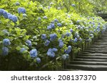An Image Of Hydrangea Temple