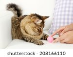 Stock photo beautiful cat playing on sofa 208166110