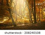autumn forest   Shutterstock . vector #208240108