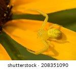 Tiny Crab Spider In The Genus...