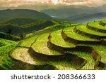 Terraced Rice Field In...