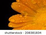 dew petals | Shutterstock . vector #208381834