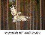 Ural Owl In Flight