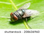 blow fly  carrion fly ... | Shutterstock . vector #208636960