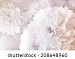 vivid color chrysanthemums... | Shutterstock . vector #208648960