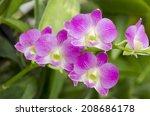pink orchids.  | Shutterstock . vector #208686178