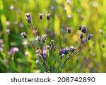 Small photo of Erigeron acris. Plant flowers close up
