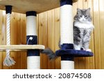 Stock photo cat playing in a huge cat house 20874508