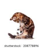 Stock photo kitten with ball 208778896