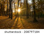 sunrise in autumn forest. the... | Shutterstock . vector #208797184