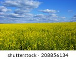 Small photo of A large field of American yellowrocket. Landscape with clouds.