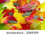 autumn leaf colors | Shutterstock . vector #2089309