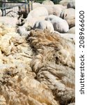 Stack Of Fresh Shaven Wool...