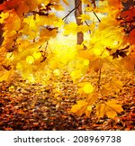 Autumn Background  Beautiful...