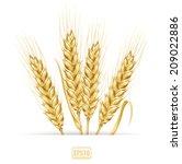 wheat ears. vector eps 10... | Shutterstock .eps vector #209022886