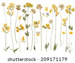 Stock photo pressed wild flowers isolated on white background 209171179