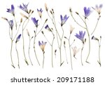 pressed wild flowers isolated... | Shutterstock . vector #209171188