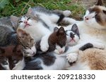 Stock photo small kittens resting outdoors at summer day 209218330