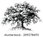 Vector Old Tree. Isolated Blac...