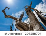 A Dead Tree Twists Towards The...