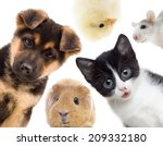 puppy and kitten and guinea pig  | Shutterstock . vector #209332180