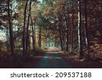 forest road. landscape. avenue... | Shutterstock . vector #209537188