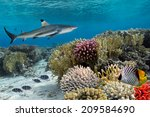 Colorful Underwater Coral Reef...