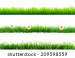 grass isolated | Shutterstock . vector #209598559